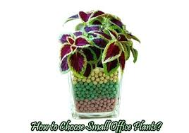 small plants for office. Small Office Plants How To Choose For Desk Online . C