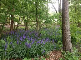 Small Picture Garden Planting Ideas Openview Landscape Design Ltd