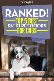 Top 5 Best Patio Pet Door for Dogs - Convenient for Owners and Pets