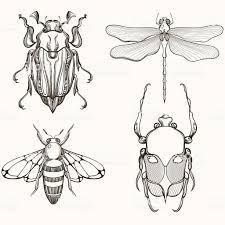 Hand Drawn Sketch Of гравировкой мая жук скарабей стоковая