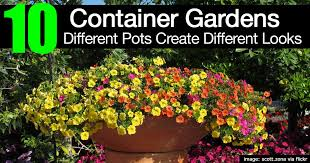 container gardens. 10 Container Gardens Different Pots Create Looks R