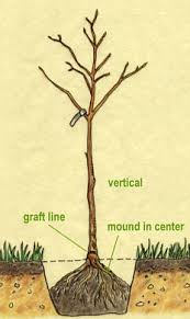 FruittreesHow To Graph A Fruit Tree