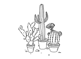quick! House Plants For Sale difficults \u201c plant care masterpost nothing makes me more upset than the thought of plants house plants for sale online