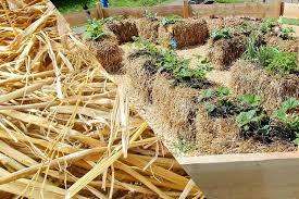alberta s best garden blog salisbury greenhouse straw bale gardening