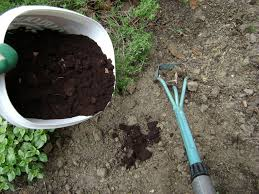 picture of adding coffee grounds directly to the soil