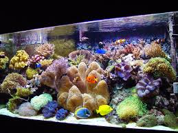 beautiful fish aquariums | ... Coral Reef CLown Fish Colorful Fish Clear  Water Large