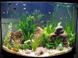 Fish Tank Accessories And Decorations How to Decorate Your Boring Fish Tank Fish tank decoration ideas 11