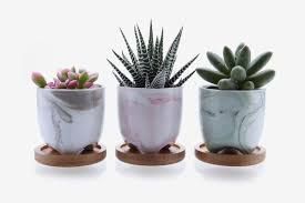 the best pots and planters on amazon