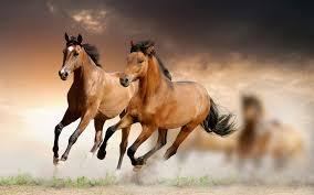 horse wallpaper desktop backgrounds HD ...