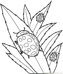 insect coloring page free printable coloring pages of insects for kids