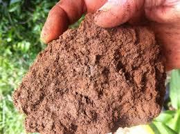 Виды почв их особенности и способы улучшения Основные типы почв  Глинистая почва