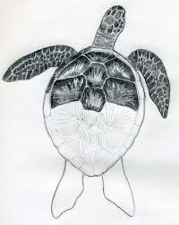 Small Picture 45 best Sea Turtles tattoo drawings and designs images on