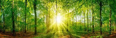 Wälder & Waldgebiete – Große Leinwandbilder – Photowall