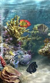 3d fish wallpaper.  Fish In 3d Fish Wallpaper
