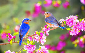 images of flowers and birds.  And 1440x900 To Images Of Flowers And Birds
