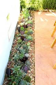 Small Picture Best 25 Colorful succulents ideas on Pinterest Suculent plants