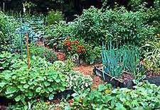 Small Picture Edible Landscaping Vegetable Garden Design Gardenorg
