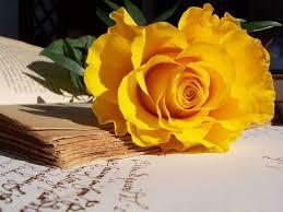 Hoa Hồng Vàng - Tiểu Lang
