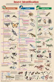 Bug Id Chart Insect Identification Chart Helps To Identify Insects