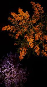 Josart Wallpaper Hd Kumpulan Gambar Wallpaper Bunga Hd Iphone