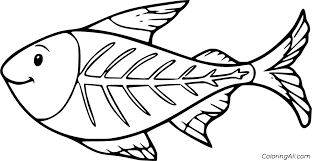 Castle color by big numbers worksheet. X Ray Fish Coloring Pages Printable Page 1 Line 17qq Com