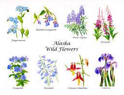 alaska painting alaska wild flowers poster horizontal by sharon freeman