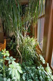 Appealing Cat Safe Indoor Plants 99 On Exterior House Design With