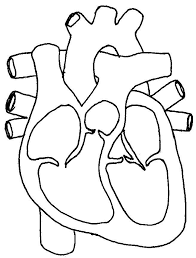 Small Picture Best 25 Human heart diagram ideas on Pinterest Diagram of the