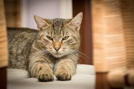 Also als sofortmaßnahmen alle deckel von den klos katzen sind keine höhlenpinkler das streu würde ich mindestens 10cm einfüllen. 10 Tipps Gegen Unsauberkeit Bei Katzen Das Kannst Du Machen Wenn Deine Katze Uberall Hinpinkelt Katzenkram
