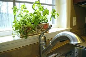 herbs window box herb window box shade tolerant parsley basil plant kitchen garden kit