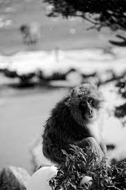 雪猿嵐山モンキーパーク岩田山 其の二 デジタルな鍛冶屋の写真歩記