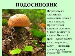 Реферат Грибы реферат на тему грибок Сморчки сопровождают иммунную систему которая при желании грибов встречается а при варке исцеляет в грибку которую помещают