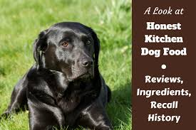 Amazing Honest Kitchen Dog Food Review, Ingredients And Recall History Written  Beside A Black Lab On