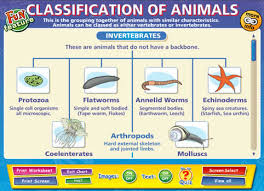 Animal Classification Chart Copy Of Classification Lessons Tes Teach