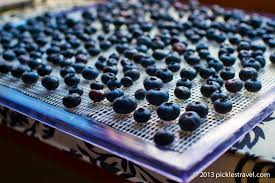 blueberry drying rack