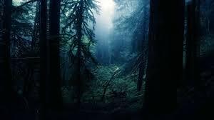 dark forest wallpaper 1920x1080. Wonderful 1920x1080 General 1920x1080 Forest Clearing And Dark Forest Wallpaper R