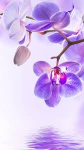 orchid flower 4k vertical