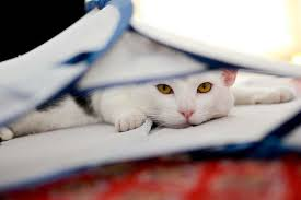 pet clean up how to clean cat urine