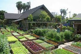 food per year on 4 000 square feet of land