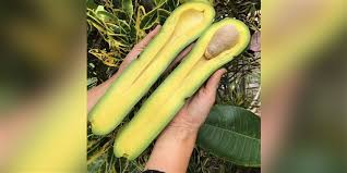 What Are Long Neck Avocados