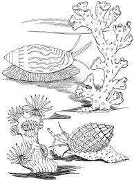 e2644c064fe04f81adb665a0385c020b 250 best images about beach zentangle on pinterest coloring on printable coupons bath and body works 10 off 30