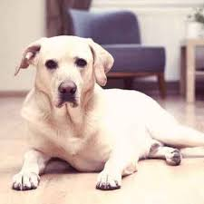 Managing Costs of Cancer Treatment for Dogs | PetCareRx