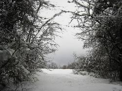 symbols ethan frome the new england winter as cold barren and miserable as it is symbolize ethan s own life as ethan lives a life that is devoid of love
