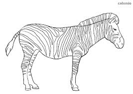 The collection includes cartoons and realistic forms of zebra coloring pages free to print. Zebras Coloring Pages Free Printable Zebra Coloring Sheets