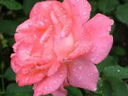 august birth flower best 25 august flower tattoo
