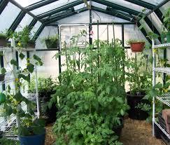 indoor tomato garden. What Indoor Tomato Garden
