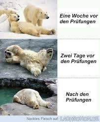 All The Time Witziges Lustig Humor Prüfungen Lustig Und Abi