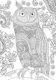 Owl Coloring Pages For Adults Printable Owl Coloring Pages Adults