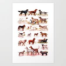 Vintage Dog Breed Chart Art Print