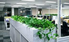 best indoor office plants. Best Indoor Office Plants In Exterior Design For Desk . Low  Maintenance Your Singapore